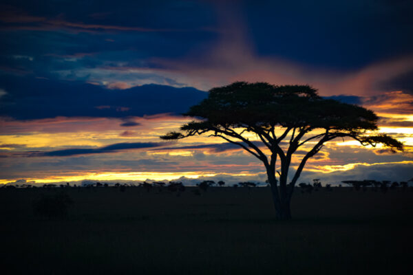 Sunrise on the Serengeti plains